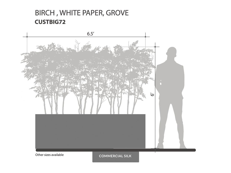 Paper Birch Grove, White ID# CUSTBIG72