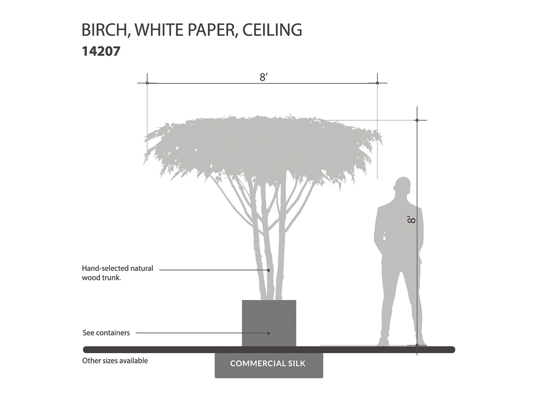 Birch Tree, Ceiling Tree ID# 14207