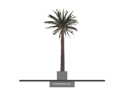 Date Palm Tree, Giant, Preserved ID# 10563