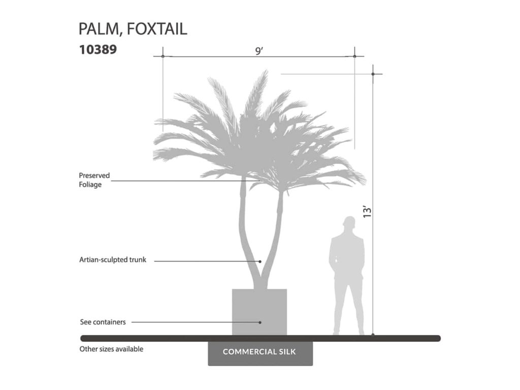 Foxtail Palm Tree, Preserved ID# 10389