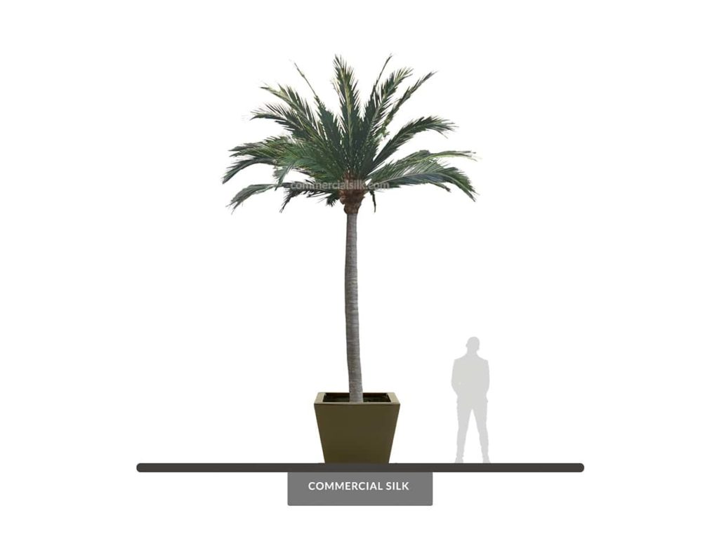 Coconut Palm Tree, 20', Outdoor ID# 10518