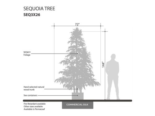 Sequoia Tree ID# SEQ3X26