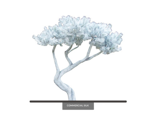 Bonsai Tree, Monochromatic ID# 14361