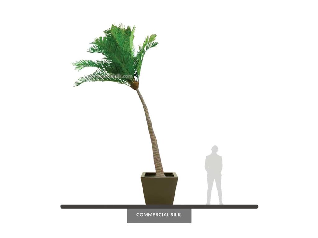 Coconut Palm Tree, Curved, Outdoor ID# 14786