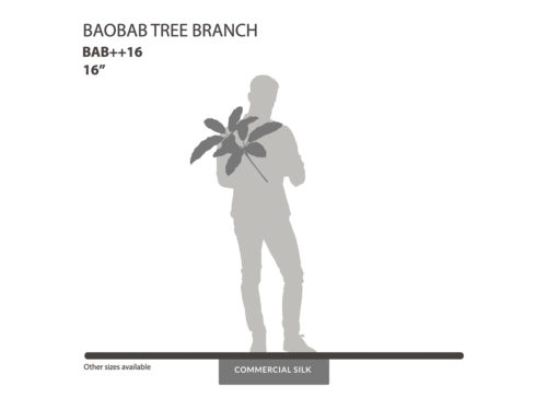 Baobab Tree Branches ID# BAB++16