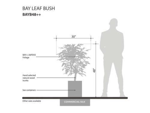 Bay Leaf Plant ID# BAYB48++