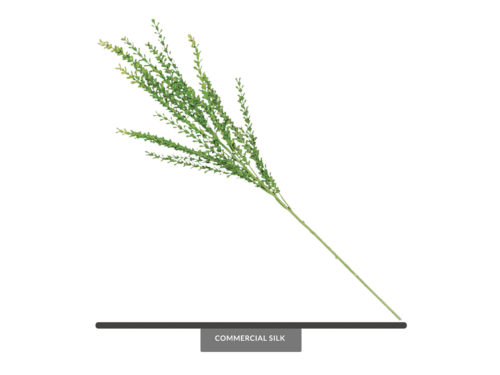 Barberry Bush, Green ID# BAR++36G