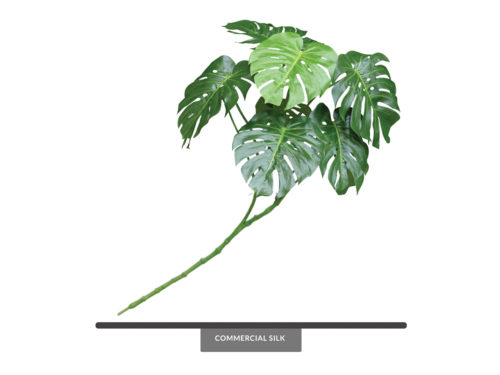 Split Leaf Philodendron Bush ID# PSL#30