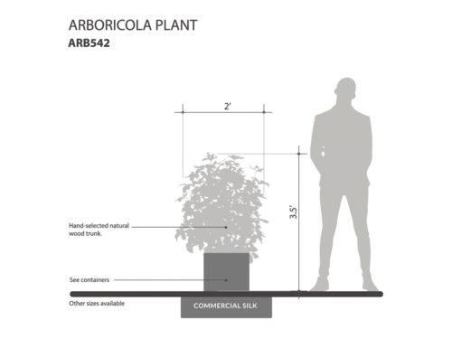 Arboricola Plant ID# ARB542