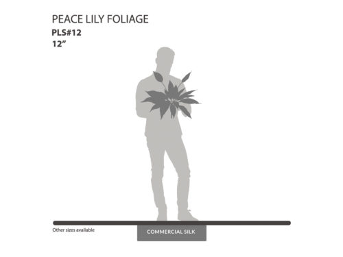Peace Lily Foliage ID# PLS#12