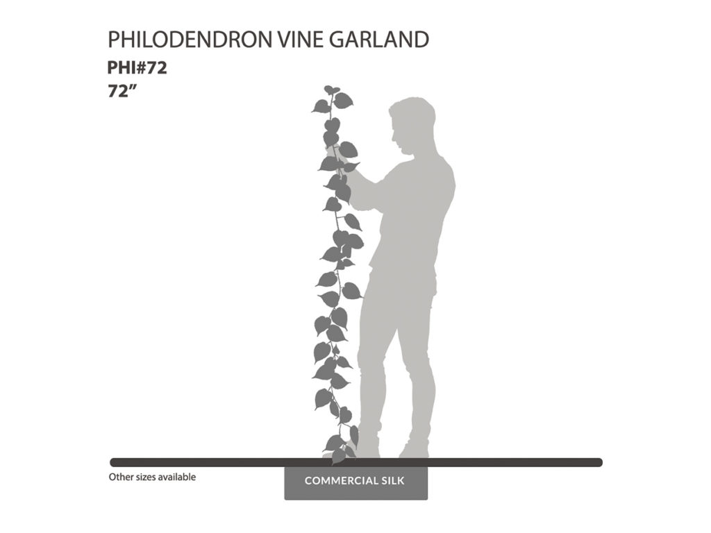 Philodendron Garland, Green ID# PHI#72