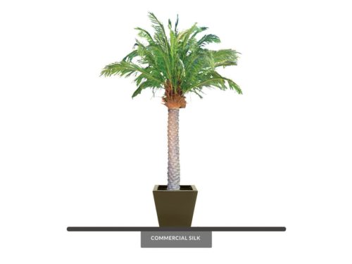 Phoenix Palm Tree, Preserved ID# CUSTPFPX9