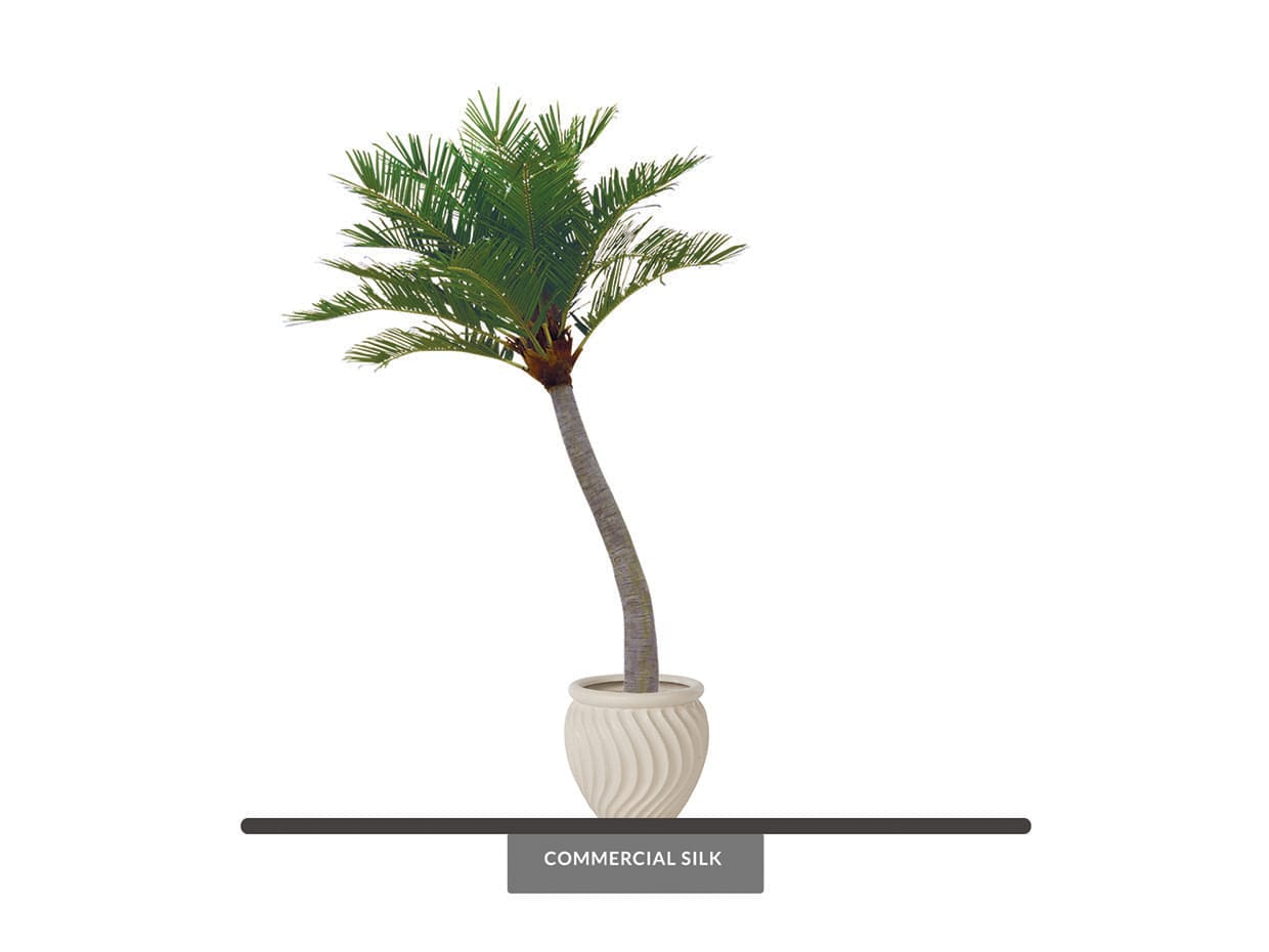 Coconut Palm Tree Curved ID# 11387