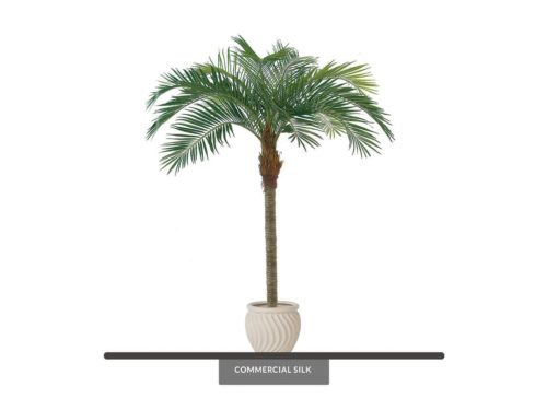 Coconut Palm Tree ID# P06516-PS