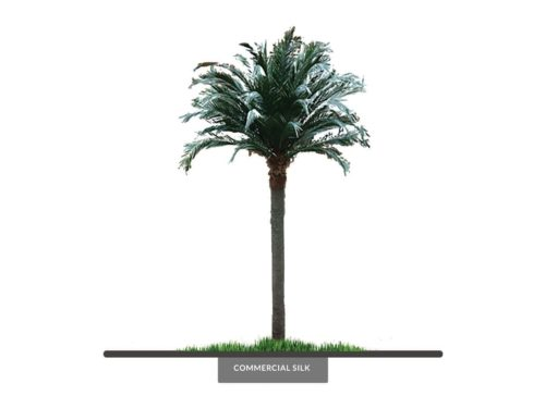 Coconut Palm Tree, 21', Preserved ID# 9795
