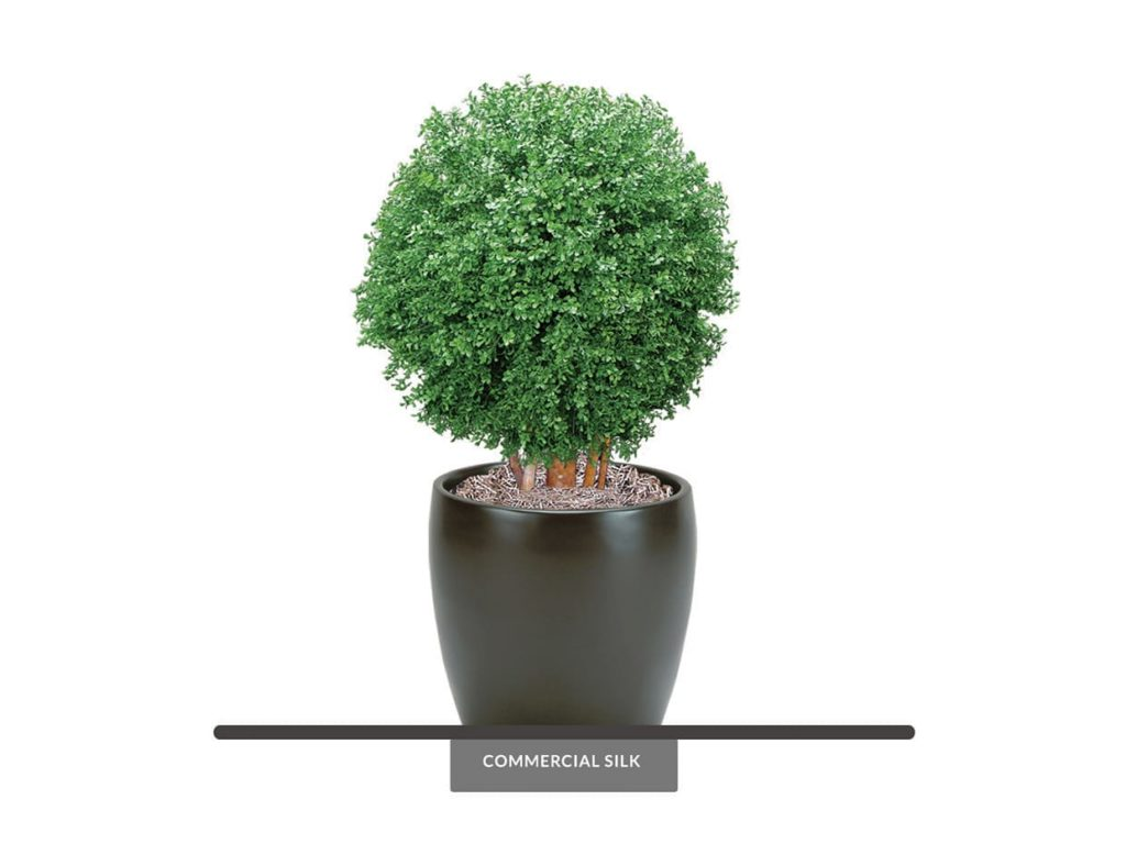 Potted Topiary Balls ID# BOX1B28