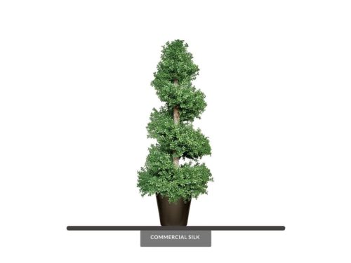 Outdoor Boxwood Spiral Topiary ID# BOXS60+