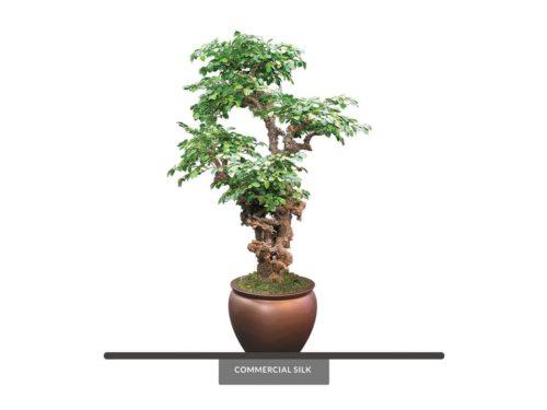 Ironwood Bonsai Tree ID# 12397