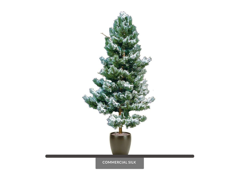 White Pine Tree, Snow Covered ID# 15484