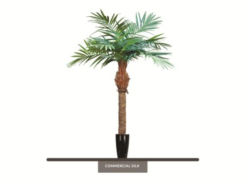 Majestic Palm Tree ID# PMA196