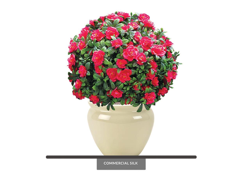 Azalea Flower Ball Plant ID# 4847