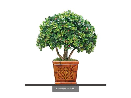 Azalea Bonsai Indoor Tree ID# 13193