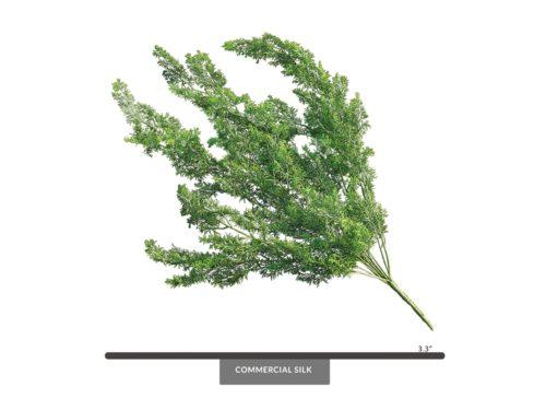 Asparagus Fern Foliage ID# FEA+33