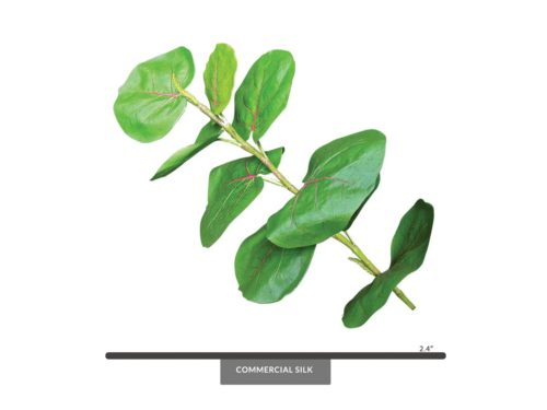 Sea Grape Spray, Green ID# SEA#24G
