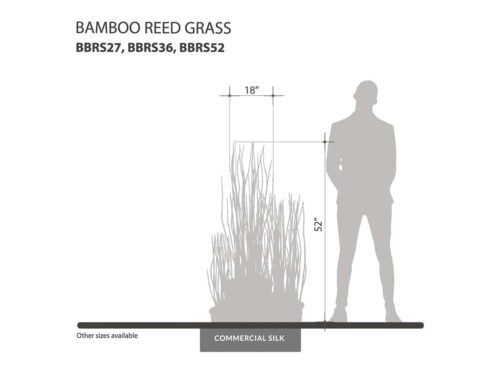 Bamboo Reed Grass ID# BBRS27, BBRS36, BBRS52
