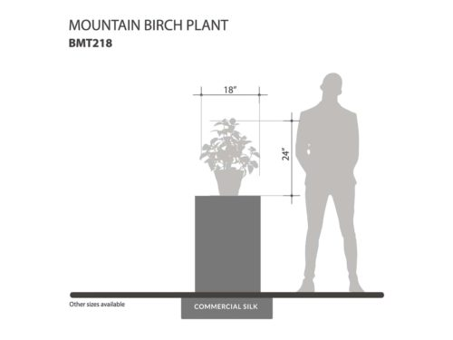 Mountain Birch Plant - Artificial Indoor Plants ID# BMT218