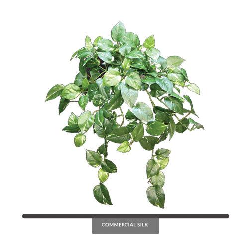Pothos Vine Foliage ID# POG#30