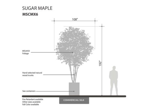 Sugar Maple Tree ID# MSCMX6