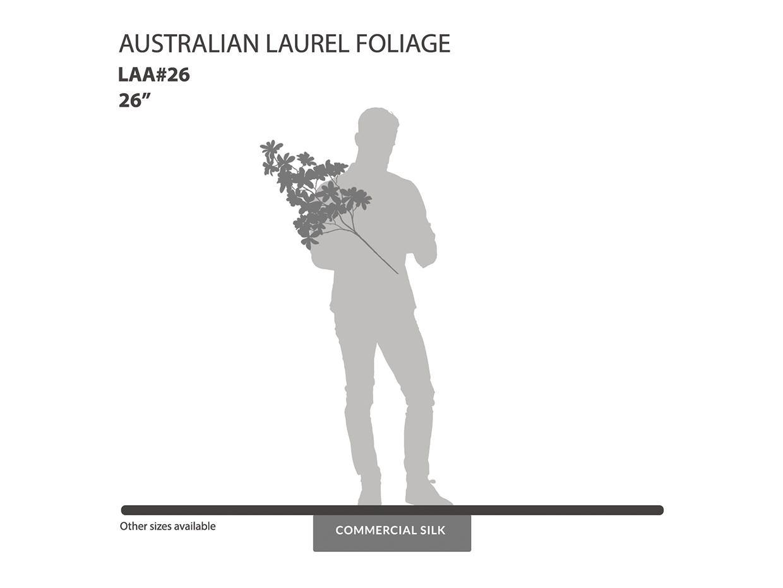 Australian Laurel Spray, Green ID# LAA#26
