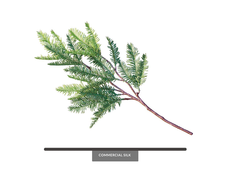 Sequoia Foliage ID# SEQ#21