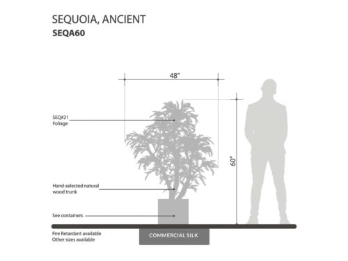 Ancient Sequoia Tree ID# SEQA60