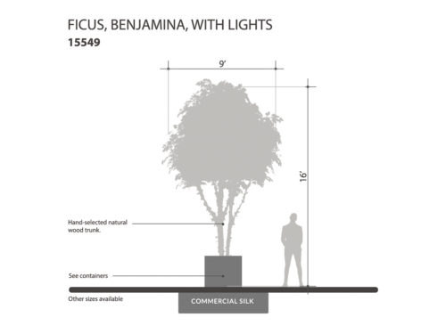 Ficus Tree, With Lights ID# 15549