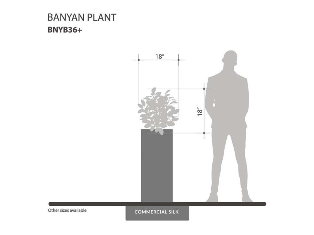 Banyan Plant ID# BNYB36+