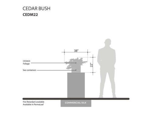 Cedar Bush ID# CEDM22