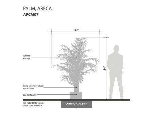 Areca Palm Tree ID# APCM07