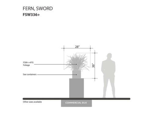 Sword Fern Bush ID# FSW336+