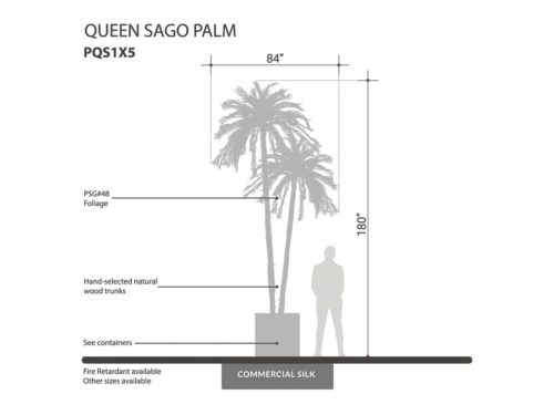 Sago Queen Palm Tree ID# PQS1X5, PQS1X1