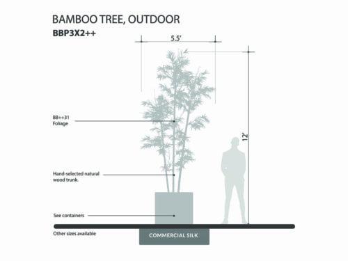Bamboo Tree, Outdoor ID# BBP3X2++