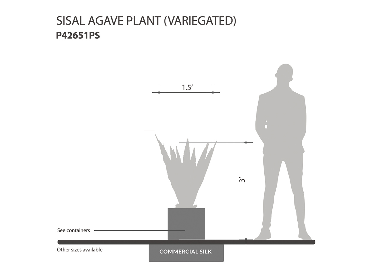 Sisal Agave Plant ID# P42651PS