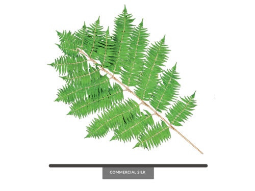 Tree Fern Spray ID# FET#36